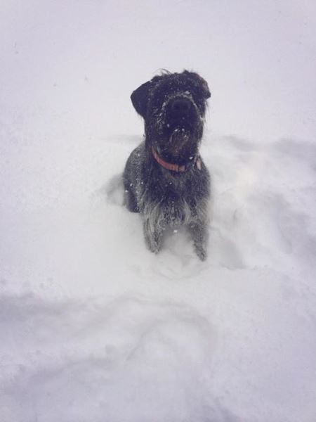 One year ago today, we were settling in with our sweet Marlow girl---with two feet of fresh snow!